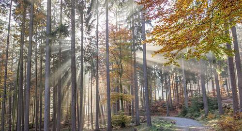 autumn light panorama fall colors forest germany deutschland hessen herbst natur landschaft farben hesse naturpark fuchstanz hochtaunus albrechtsweg