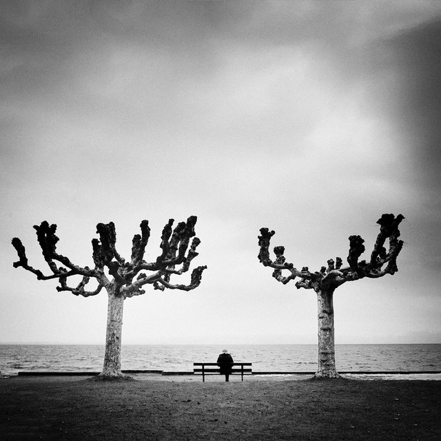 Trees - Minimalism in Street Photography