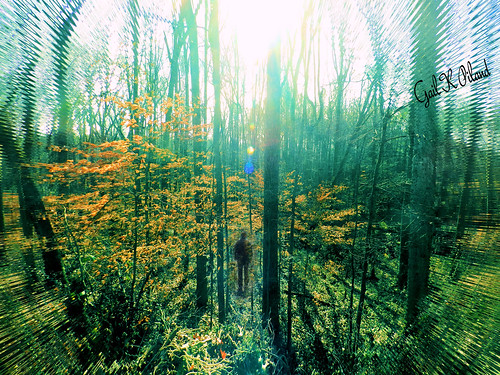 trees forest photoshop woods energy soe autofocus thegalaxy flickraward theperfectphotographer flickrestrellas thebestofday gailpiland ringexcellence flickrstruereflection1 rememberthatmomentl1