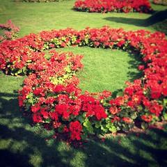 #miracle #garden #dubai #uae #love #heart