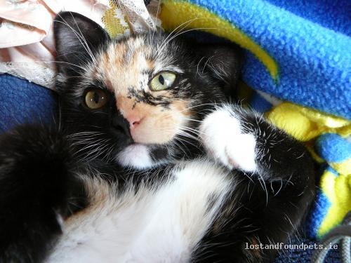 [Updated] Fri, Feb 22nd, 2013 Lost Female Cat - Carrowkilla, Ballynacally. , Clare