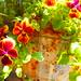 mon jardin by ueha nochi