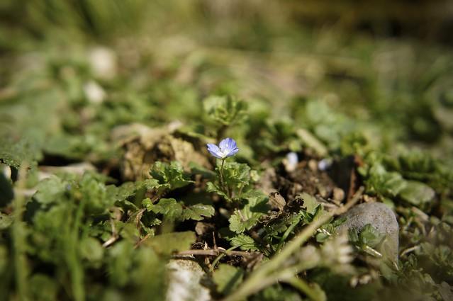 「春」始めました^^;