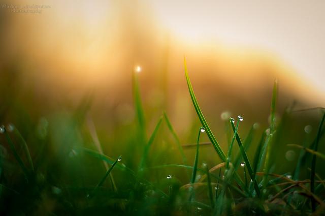 Grass bokeh