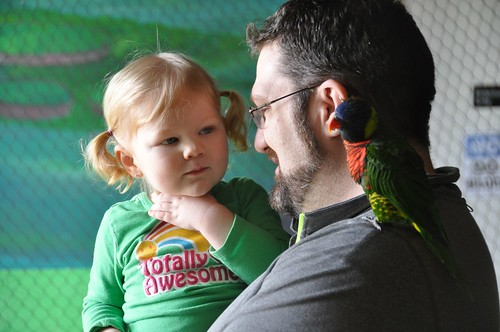 Eyeing the bird on Daddy's shoulder