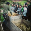Global Exchange staff volunteer day-Urban Farming at Alemany Farm by Global Exchange Gallery