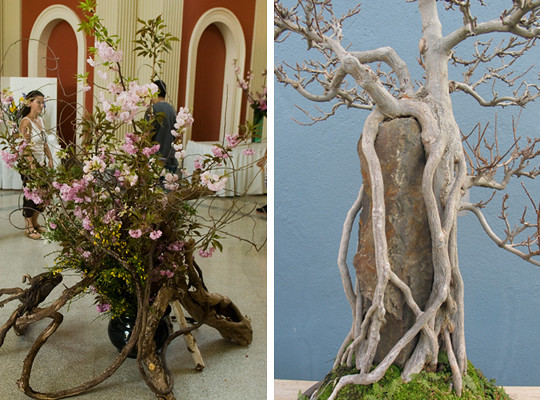 Ikebana designs (left); photo by Jason Gardner. Specimen from the C.V. Starr Bonsai Museum; photo by Julian Velasco.