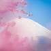 Mt Fuji through cherry blossoms by fuuna