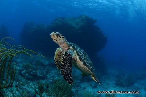 Turtle on Proselyte reef