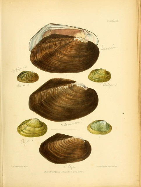 Conchologia indica, being illustrations of the land and freshwater shells of British India
