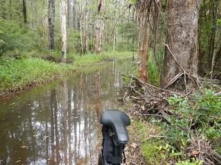 Flooded Tracks - Woodford