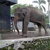 Elephant #zoo