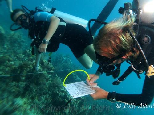 潛水志工於貝里斯宏都拉斯海灣中進行珊瑚礁體檢行動 攝影者:Polly Alford