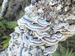 flower(0.0), oyster mushroom(0.0), leaf(1.0), tree(1.0), mushroom(1.0), flora(1.0), trunk(1.0), hen-of-the-wood(1.0),