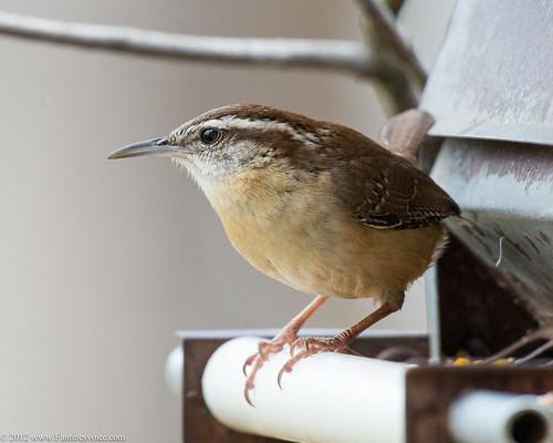 Birds Sat Test