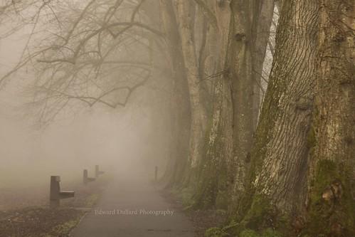 kilkenny ireland mist nature weather fog landscape atmosphere emeraldisle irlanda ierland edwarddullardphotographykilkennycityireland 9deanstreetkilkenny