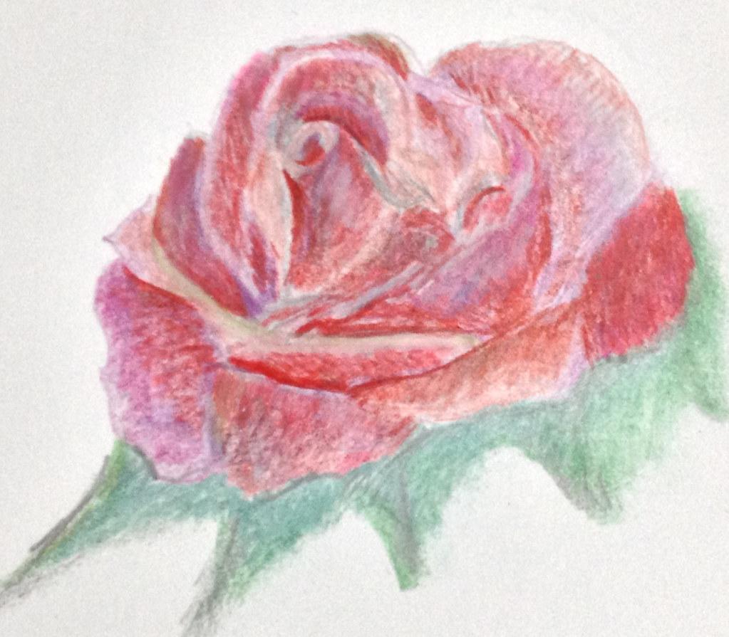 01-16-13-rose
