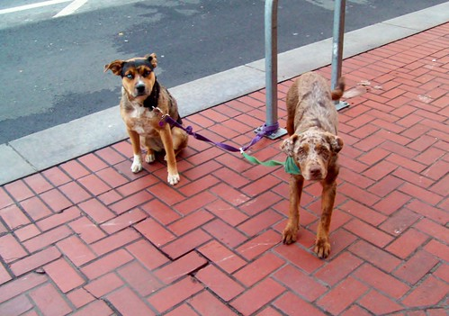 Dogs on Market St. by karaokegal