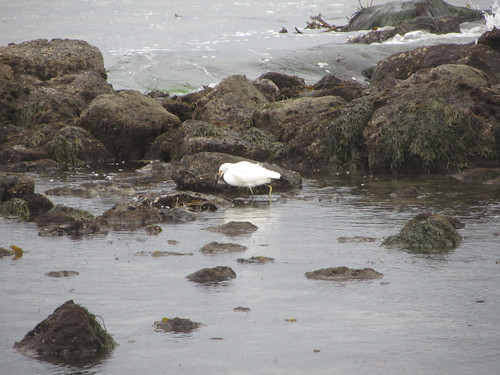 hello, egret
