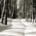 Chemin effacé... barrières d'ombres... je ne peux plus passer...!!! by Denis Collette...!!!