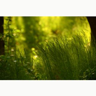 Greentensification