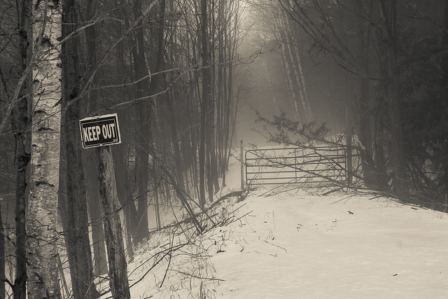 Woods, Rural, Driveway, Gate, Keep Out, Posted, Monochrome, Fog, Foggy