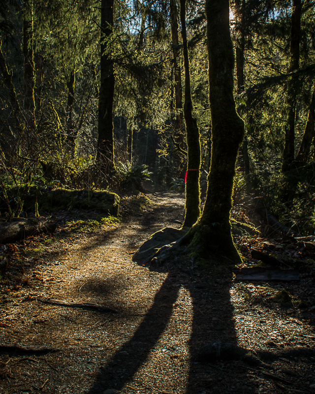 Shadowy trail
