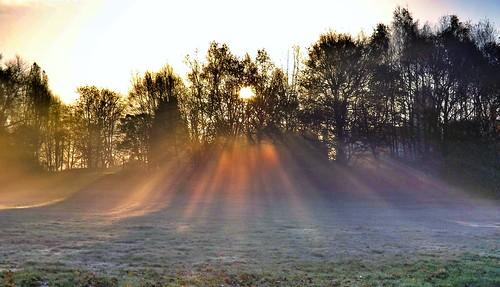[フリー画像素材] 自然風景, 樹木, 薄明光線, 朝焼け・夕焼け ID:201302130600