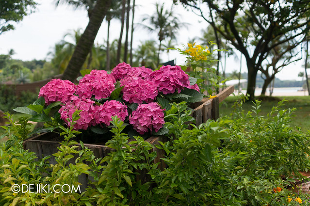 Sentosa Flowers 2013 - Wheelbarrow