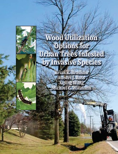 A new Forest Service manual provides advice on marketing the wood from infected trees. (U.S. Forest Service photo)
