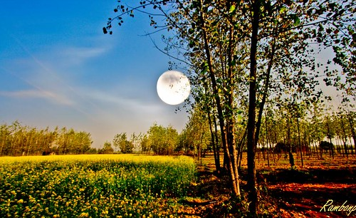 trees red wallpaper sky moon india mountains green leaves yellow fog clouds farmhouse canon landscape paradise village lagoon hills crop agriculture punjab hdr cultivation chandigarh musteredfield bestevergoldenartists
