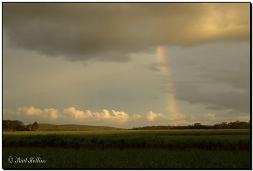 Rainbow Over Cane Fields