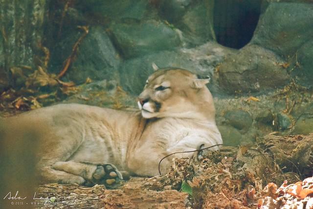 Puma Zoobic Safari