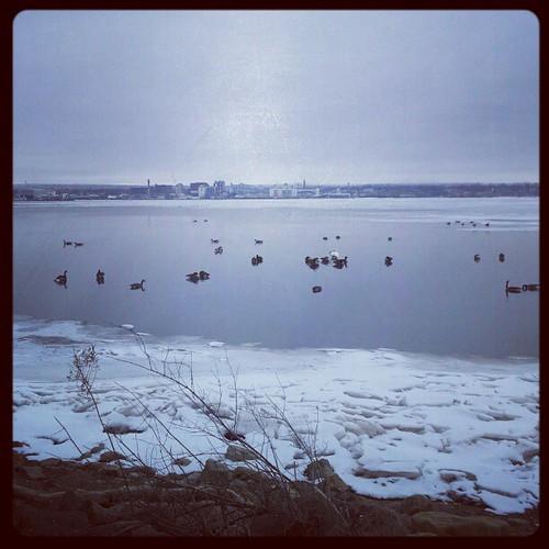 #presqisle #lakeerie #erie #eriepa #eriegram #water #geese #ice