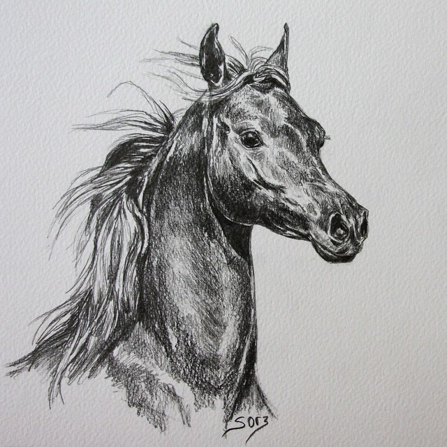8529599623 081d8f3fa4 z jpgRealistic Horse Drawings