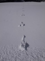 木, 2013-02-28 11:20 - 兎の足跡