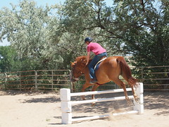 Z and Calliope, jumping