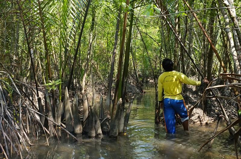 Mangrove 6