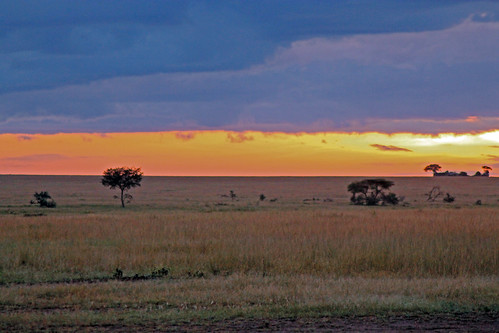 Serengeti Canvas Prints