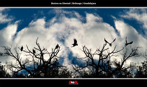 Buitres | Brihuega | Guadalajara by alrojo09