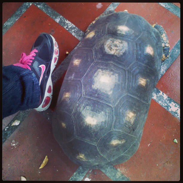 """La morrocoya de la casa! Compren mi pie yo calzo 37! Ã""""sea la Morrocoya! #morrocoy #bigmorrocoy"""