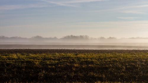 009 - Fog by matneym