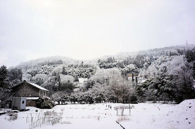 1月17日 雪
