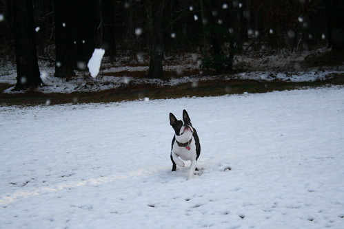 Charlies First Snow Jan 2013 (93)