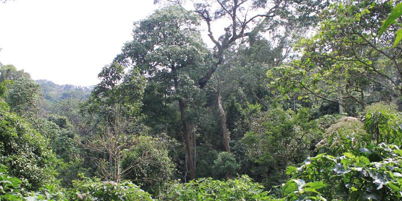 metsää1