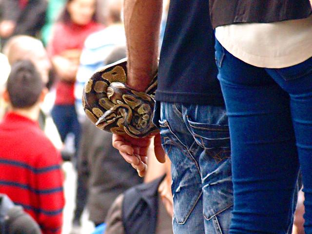 Snake Bracelet, San Abad, Buenavista del Norte, Tenerife