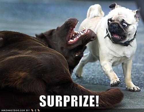 Anal humungous pug