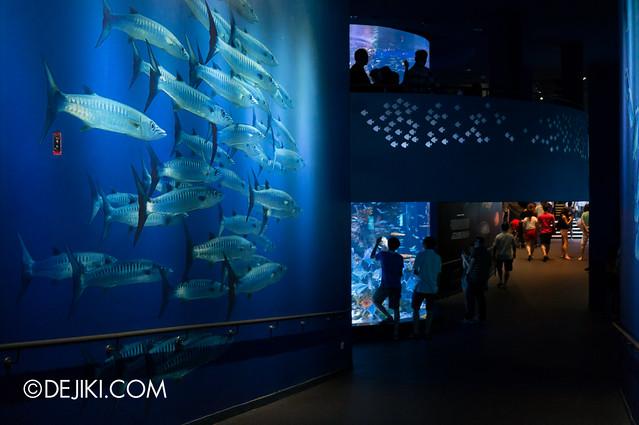 S.E.A. Aquarium - Thematic Walls 2