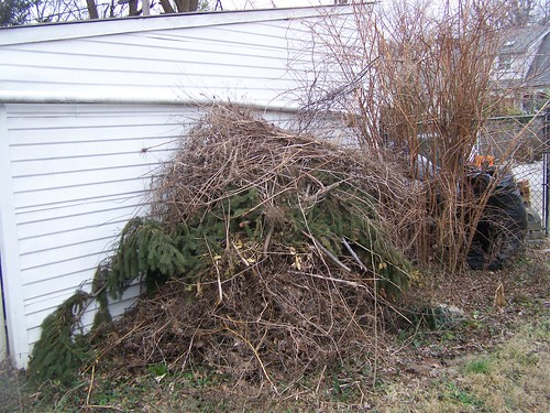 Our loose compost pile for brush and branches