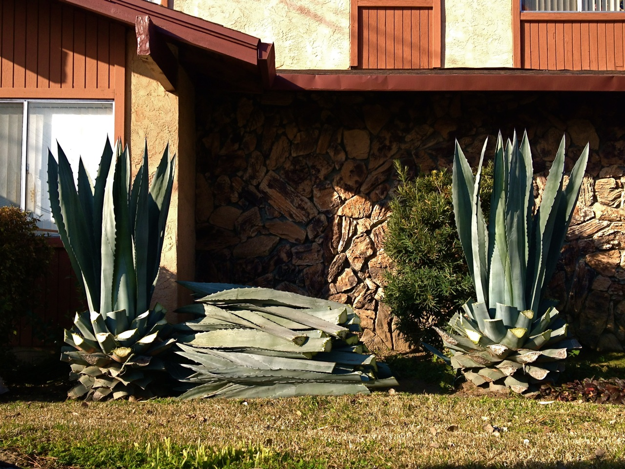 Landscaping Rocks Lodi Ca : Elevation of w century blvd lodi ca usa maplogs